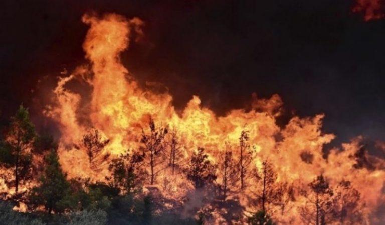 Πυρκαγιές 2019. Στο ίδιο έργο θεατές